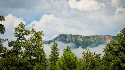 Birding Gila County See Canyon Trailhead