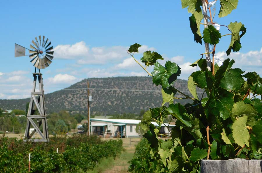 Bruzzi Vineyard Iconic Windmill