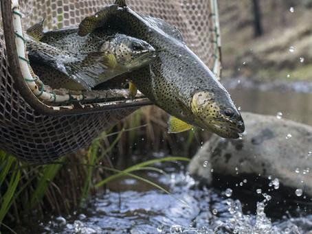 Ten Top Fishing Destinations in Gila County