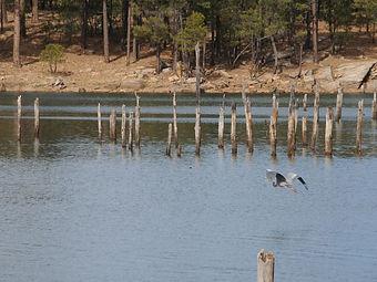 Birding Gila County Willow Springs Lake