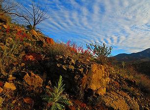 Wilderness_Content_8.jpg