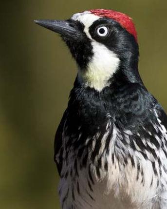 PinalMountains_content_9_Birding.jpg