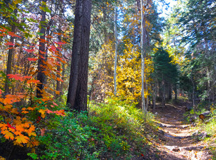 TontoNationalForest_content_trails.jpg