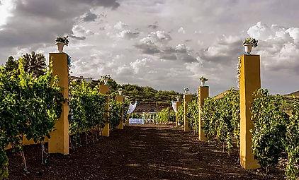 Waggin' Vineyard & Estate