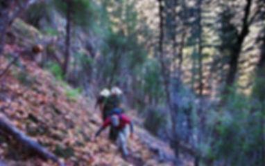 Trails_BareflatTrail.jpg