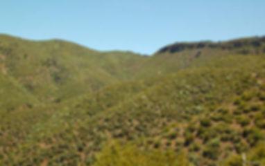 Trails_Brushtrail.jpg
