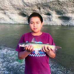 Gila River Channel Catfish