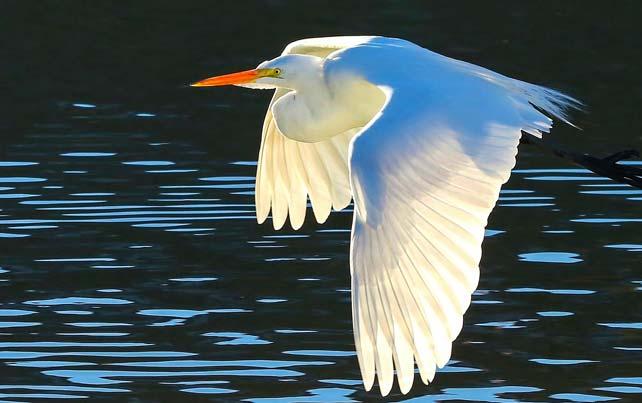 Birding_GilaCounty_Payson