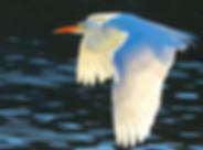 Birding_GilaCounty_Payson.jpg