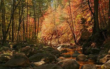 Trails_seecanyontraill.jpg