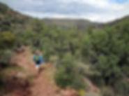 Pine_hiking-compressor.jpg