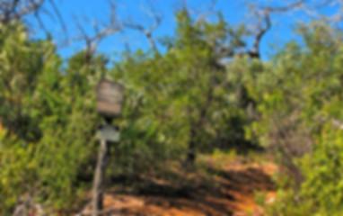 Trails_OakflatTraill.jpg