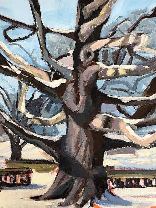 Tree in Deering Oaks by Cheryl Seavey