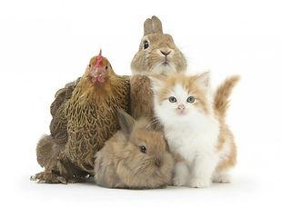 Litière naturelle pour animaux chat chien poule lapin animaux domestiques