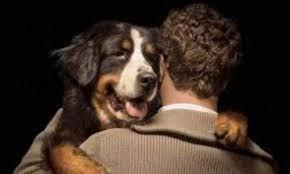 INTERcids propone la creación de un Turno de Oficio especial para la protección de animales
