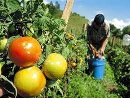 Algunas claves sobre la contratación temporal en el sector agrícola