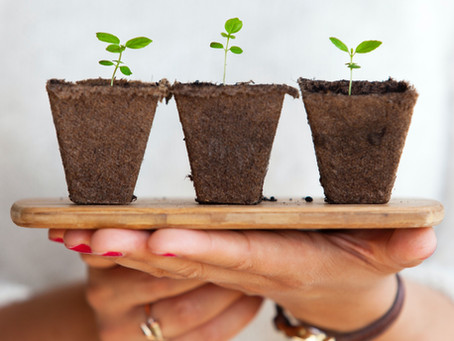 Existuje udržitelnost v potravinách?
