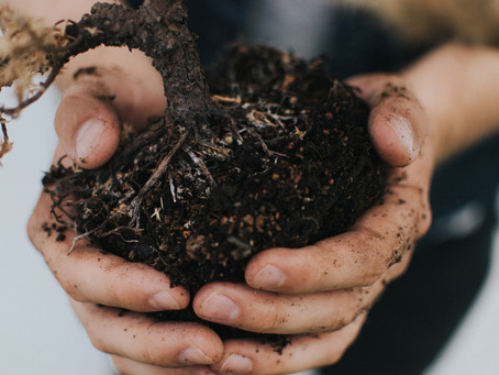 Getting to the Root: Relationship Tending