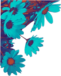 flowers from album cover of worship