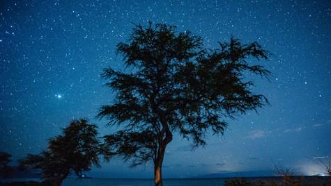 Night Tree-1.jpg