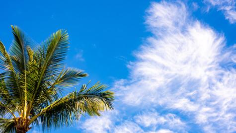 Tree and Cloud-1.jpg