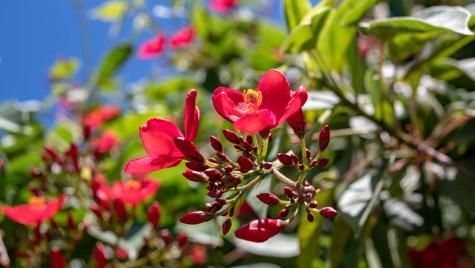 Beautiful Flower.jpg