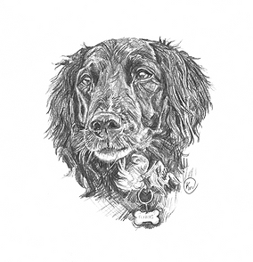 Portrait of pet dog Pebbles, black dog with bone collar, illustration by Kirstianne Wells 2017