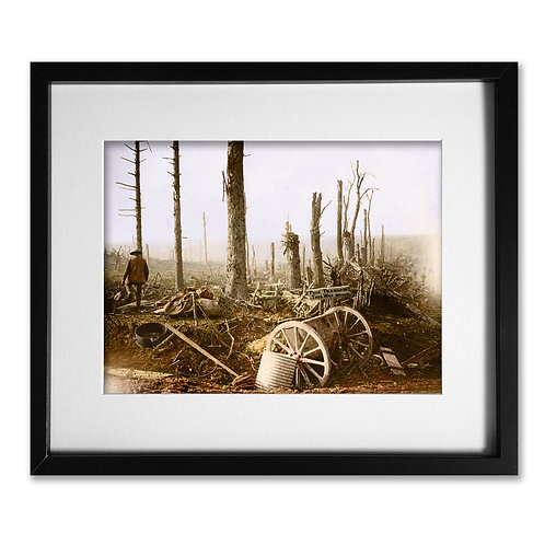 Somme 1916: Ravaged Forest