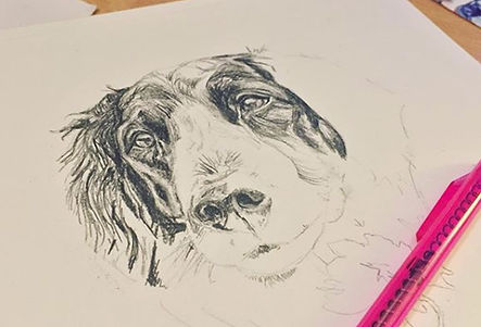 Portrait of Dog, Work in Progress Pencil Drawing.  Pet portrait by Kirstianne Wells