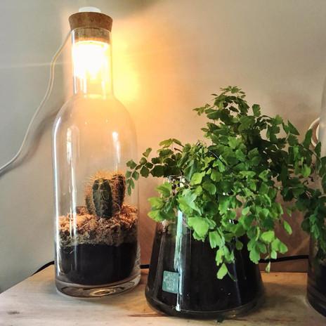 lampe + terrarium ouvert