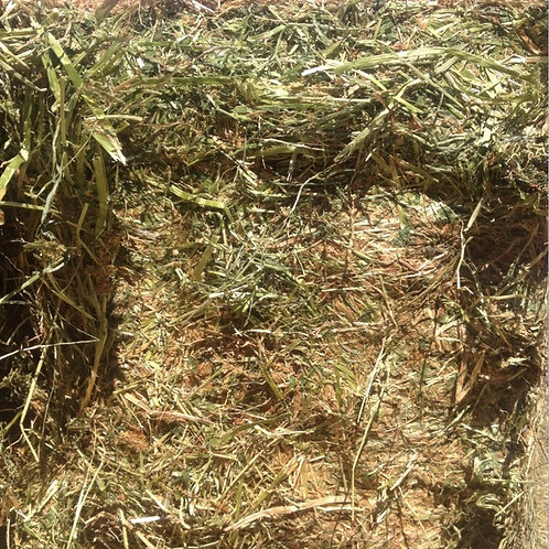 Grass Hay Bale (clover/rye)