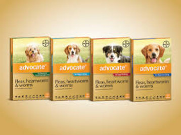 Advocate Dog 6 Month Packs