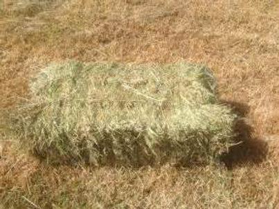 Grass Hay Bale (rye)