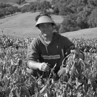 Jesse Kuhn, Marin Roots Farm