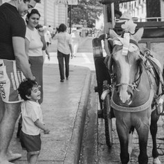 Merida Boy and Horse