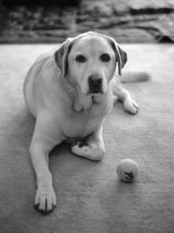 Sadie Dog 1