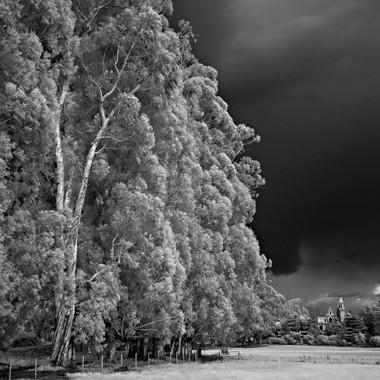 St. Vincent & Eucalyptus
