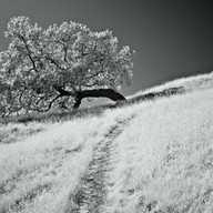 Lone Oak Montecillo Road, San Rafael