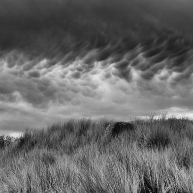 Dune Grass #1, Goat Rock Beach