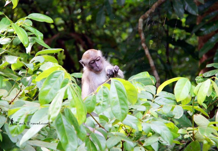 Monkey tearing spider web