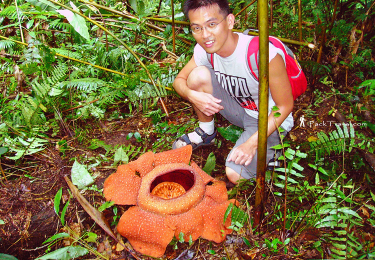 Me & Rafflesia