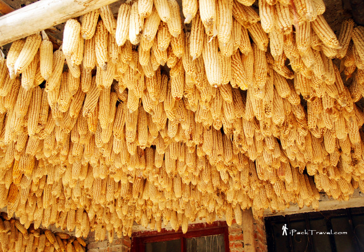 More corns hanging out to dry