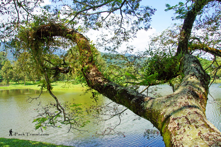 Tree branch