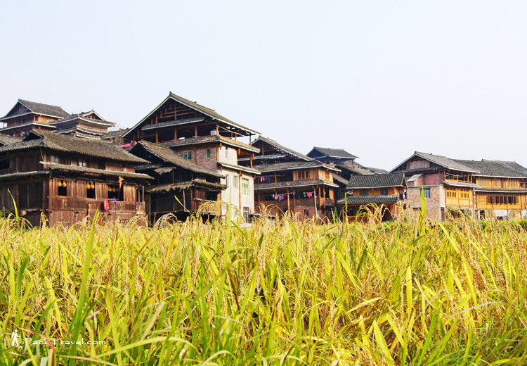 Ma'an Village with paddy field