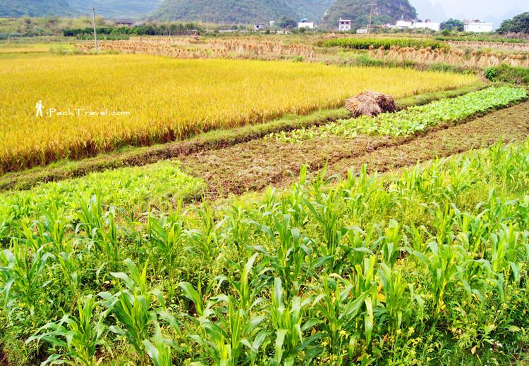 Farmland in Baisha Town
