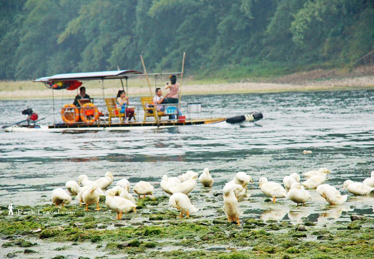 Ducks on river bank