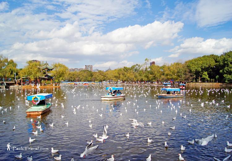 Seagulls in Cuihu Park
