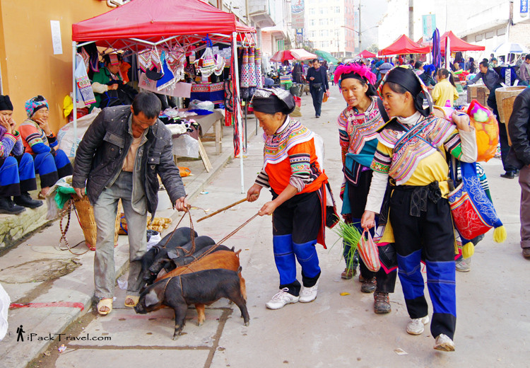 Yi ladies with pigs