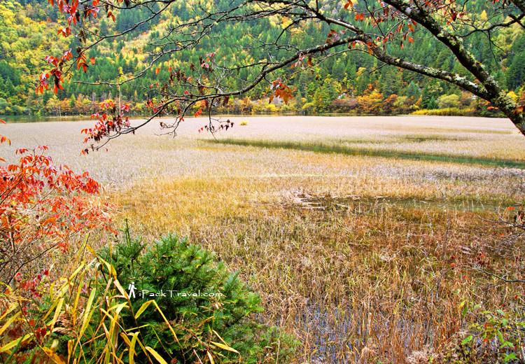 Grass lake near Mirror Lake