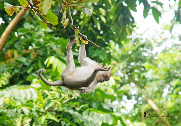 Little monkey on a tree